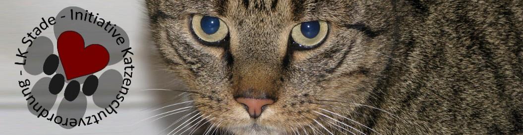 Initiative Katzenschutz